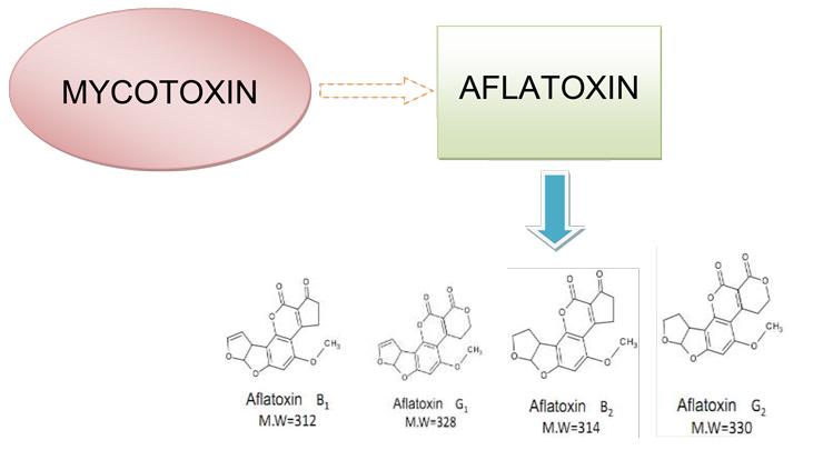 cot-chiet-aflatoxin-2