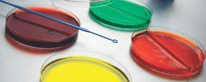 Hóa chất môi trường nuôi cấy vi sinh