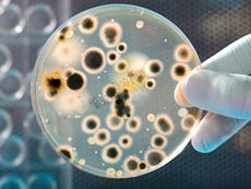 Hóa chất môi trường nuôi cấy Coliform