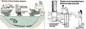 Vì khuẩn Coliform là gì? Ecoli Fecal Coliform