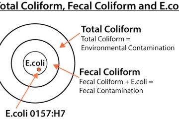 Vi khuẩn coliform là gì và nước uống hàng ngày