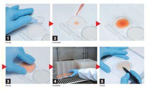 Cách sử dụng đơn giản của Đĩa đông khô Compact Dry